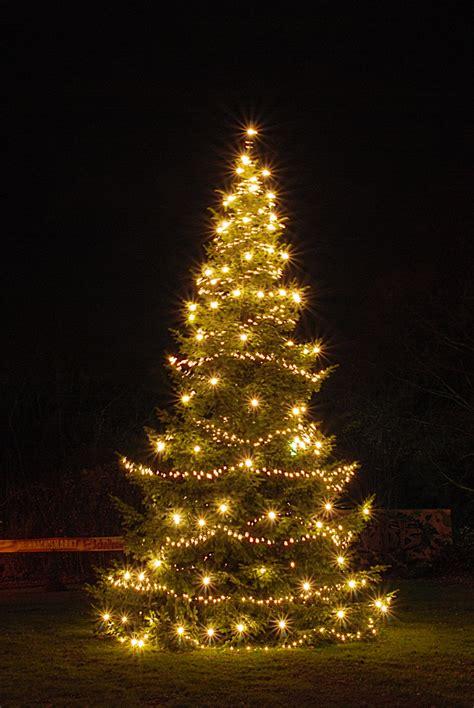 der weihnachtsbaum der weihnachtsbaum foto bild natur nadelb 228 ume b 228 ume