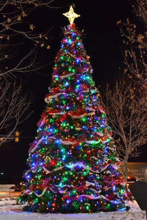 decorated trees with multicolor lights decorated trees with multicolor lights 28 images 1000