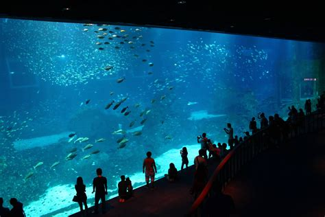 sea aquarium world s largest aquarium locks up underwater magic in majestic diversity
