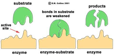 molecule illustrations
