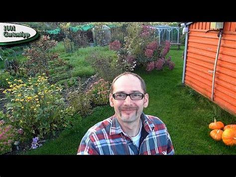 Adventskalender Der Garten Youtuber by Winter Jungpflanzenanzucht Aussaat Kohlrabi Bl