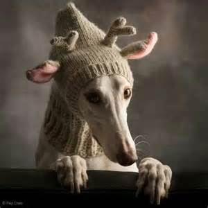 greyhound knitted hat pattern greyhound knitted reindeer hat whippets and hounds