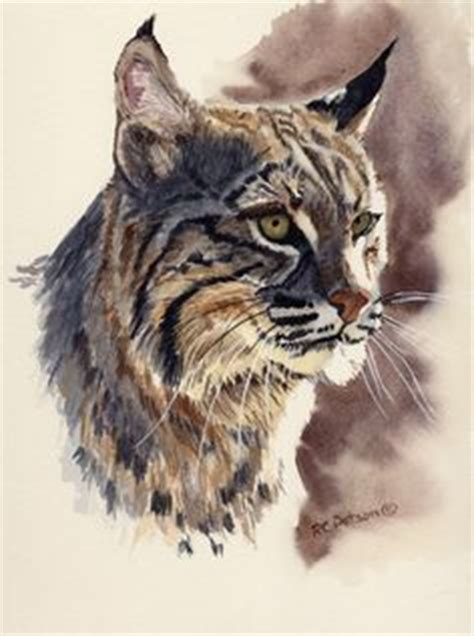 1000 images about watercolor the bobcat lynx on