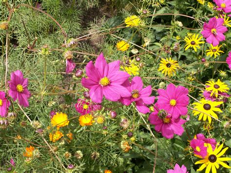 flowers shade garden 100 shade garden flowers best flowering perennials