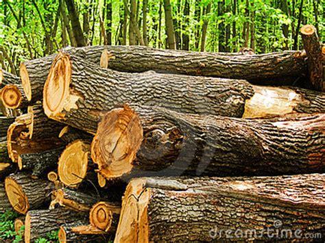 oak tree woodworking logs of a tree an oak in wood royalty free stock images