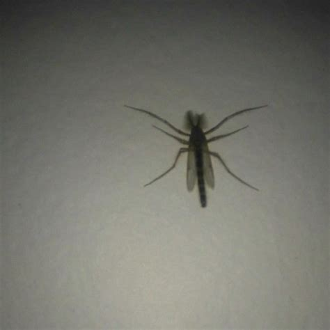 tiny flying insects in house tiny flying insects in house house decor ideas