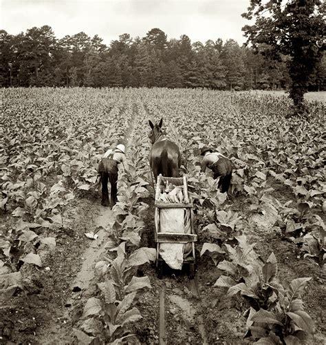 fotograficas oleograficas: Farm Security Administration #2