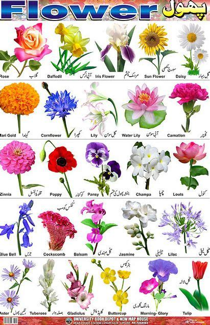 garden flower types 66 best images about bulbs and pruning on