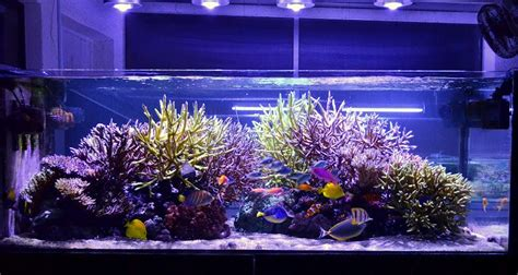 aquarium led lights orphek led emissor