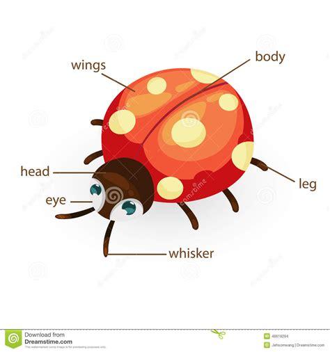 ladybug vocabulary part of body stock vector image 46619294