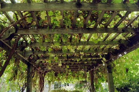 grape arbor overhead