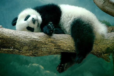 one panda большая панда мастерок жж рф