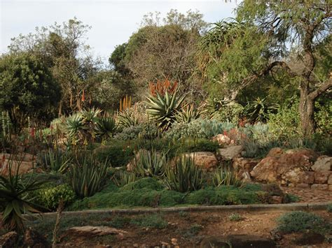 walter sisulu botanical garden walter sisulu national botanic garden