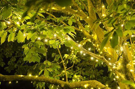 summer tree lights tree lights for and summer yard envy