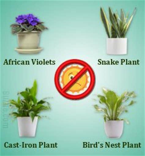 houseplants that don t need sunlight indoor plants that don t need sunlight