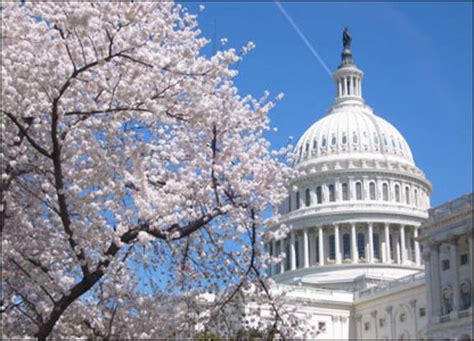tree up dc obama regime warns government shutdown would jeopardize dc