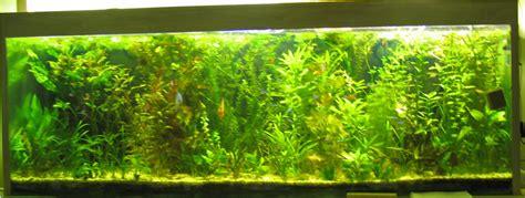 aquarium eau douce installation