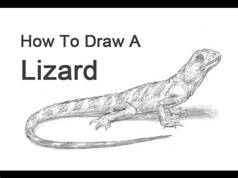 how to make a lizard out of how to draw a lizard
