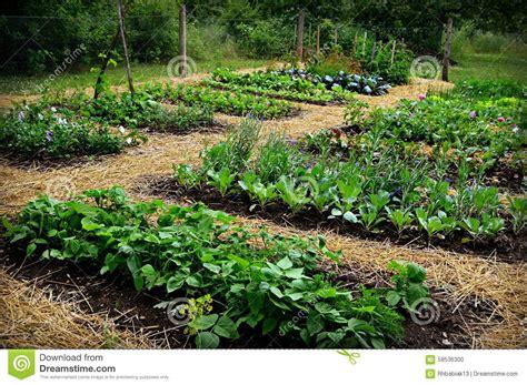 the vegetable garden vegetable garden stock photo image 58536300