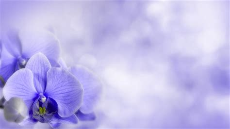 light flowers image gallery light purple flowers