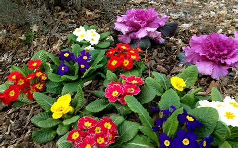 winter flower garden winter garden your house a home