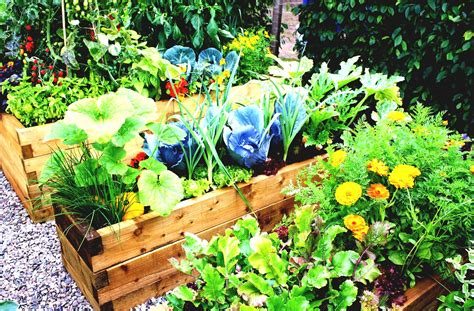 simple vegetable garden ideas simple vegetable garden ideas for your backyard with