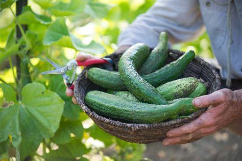 vegetable garden care abcs of summer vegetable garden care p allen smith