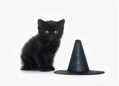 witches cat 7 things we d like to see in any prestige cable show about