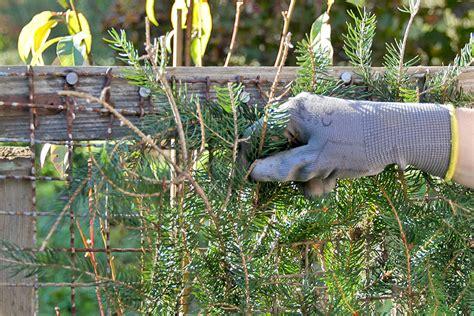 Der Garten Im Oktober by Der Garten Im Oktober Tipps Tricks Vom G 228 Rtner