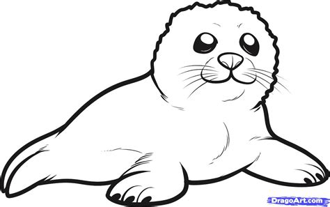 pictures to coloring book seal coloring pages and print for free