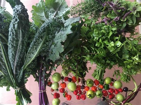 vegetable gardening in south florida planting organic vegetables herbs and fruits in south