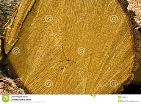 oak tree woodworking oak tree wood royalty free stock image image 16196716