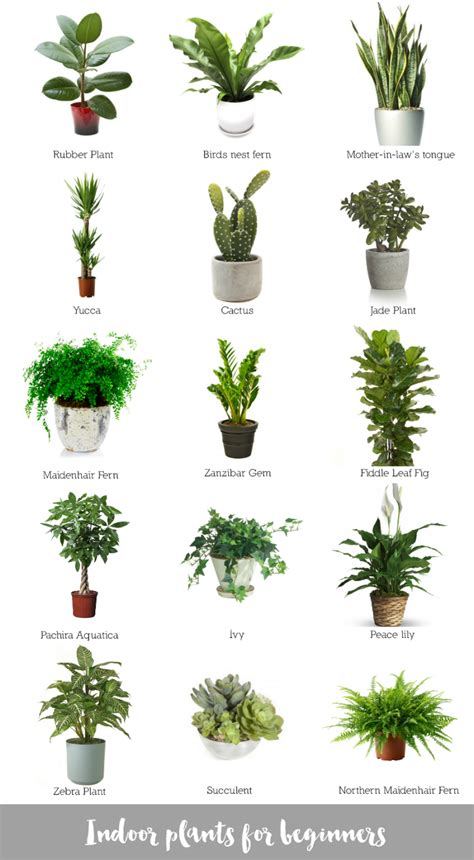 inside house plants indoor plants for beginners