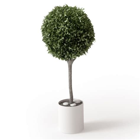 small potted green leaf tree 3d model cgtrader