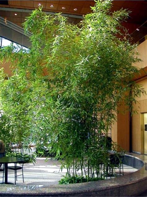 bamboo garden design ideas yes bamboo garden do at home important garden design