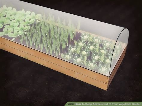 how to keep cats out of vegetable garden 3 ways to keep animals out of your vegetable garden wikihow