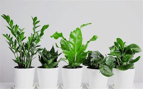 best plants to grow indoors in low light 15 best low light houseplants to grow indoor