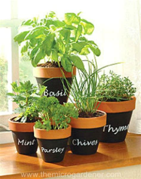 herb pot indoor herb garden ideas creative juice