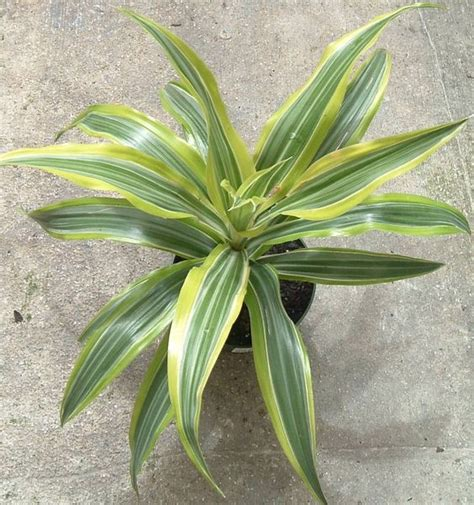 houseplants for low light conditions the 7 best houseplants for low light conditions gardens