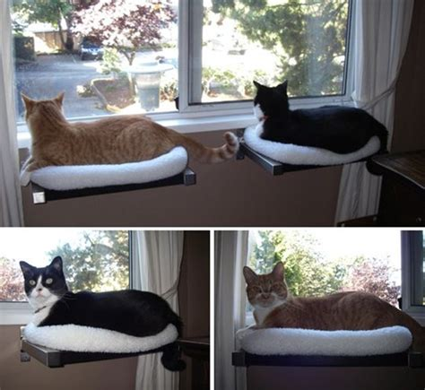 cat ideas 10 cool hanging cat perch ideas and fur