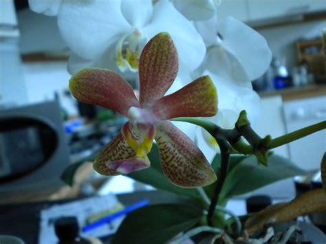 liste orchid 233 es 224 vendre ou donner