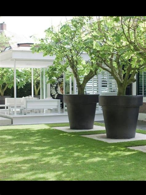 large planters for trees the world s catalog of ideas
