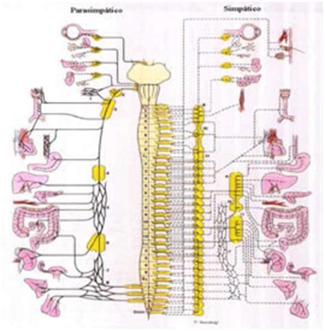 cadenas ganglionares slideshare bloqueo del sistema nervioso