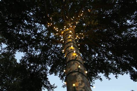 wrapping trees with lights how to wrap outside trees with lights