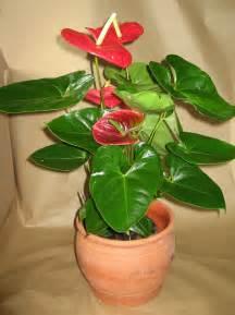 plantes vertes fleuries d int 233 rieur l atelier des fleurs