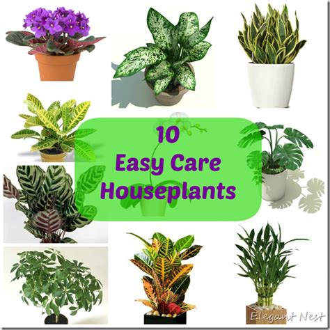 easy houseplants 10 easy to care house plants