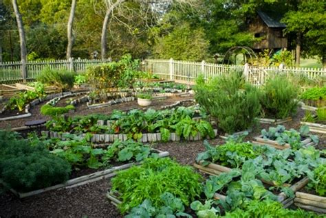 kitchen vegetable garden skitchengarden services sustainable kitchen garden