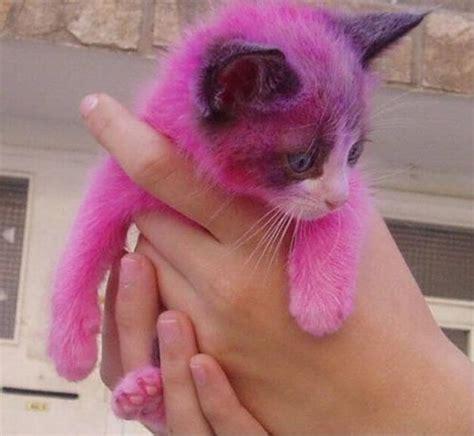 pink cat pink cat