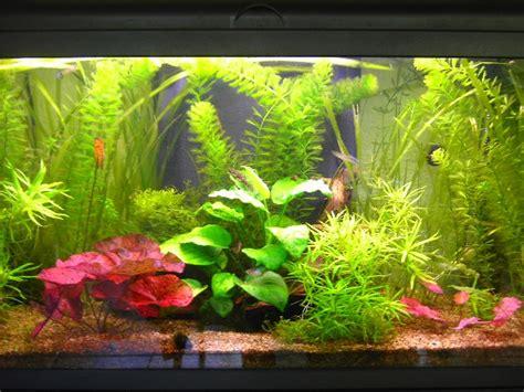 bien entretenir aquarium 28 images children s books marelibri comment bien nettoyer et