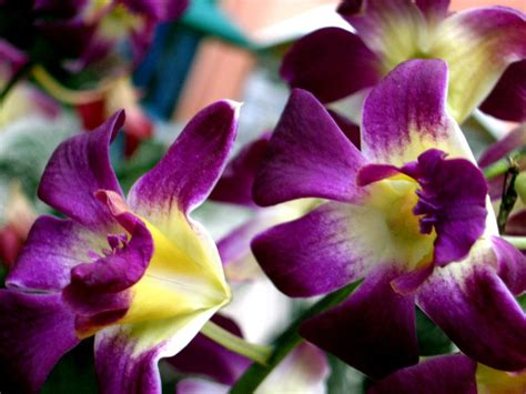 beautiful flowers names and pictures tropical flower names and pictures beautiful flowers